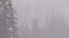 Blizzard Forest 2 Stock Footage