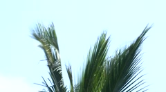 Palm branches Stock Footage