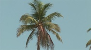 Coconut palm tree zoom out to jungle next to beach Stock Footage