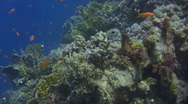 Stock Video Footage of LONG Coral Reef Gliding Ascent