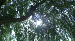 Tree and Sun Full hd 1080p Stock Footage