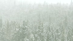 Snow blizzard in a Rocky Mountain forest - stock footage