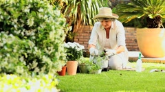 Mature woman potting a plant in garden Stock Footage