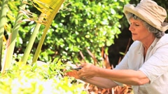 Mature woman clipping a plant in the garden Stock Footage