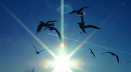 Seagull the air sky travel Stock Footage