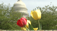 Tulips at Capitol Hill, Washington DC  (3) Stock Footage