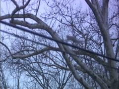 Squirrels telephone wire run left thru frame - stock footage