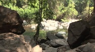 The Jungle in India Stock Footage