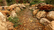 A stream with clear water and rocky bottom Stock Footage
