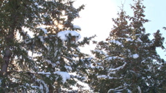 Snow Trees Sunburst Flurry Stock Footage