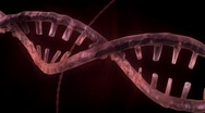 Stock Video Footage of DNA Strand - Red Version 3