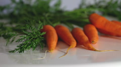 Dutch Carrot - stock footage