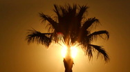 Palm Tree Sun Stock Footage