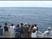 People watching a whale Stock Footage