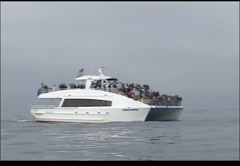 whale watching boat - stock footage
