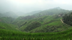 China rice fields rays of light beautiful green scenic landscape Stock Footage
