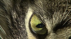 The cat's eye - stock footage
