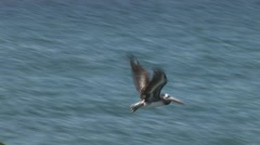 Pelican flying Stock Footage