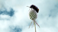 Bug on the plant over cloudy sky Stock Footage