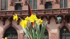 German flag springtime - stock footage