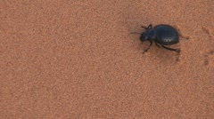 Big beetle in sand, passing by Stock Footage