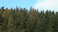 Stock Video Footage of Conifer Skyline