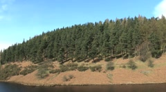 Conifers - stock footage