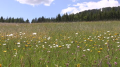 Countryside in Styria - stock footage