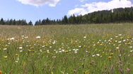 Stock Video Footage of Countryside in Styria