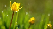 Stock Video Footage of spring