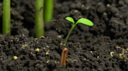 Micro sprout growing from soil time-lapse Stock Footage