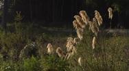 Beautiful New Zealand countryside Stock Footage