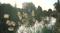 River setting in New Zealand Stock Footage