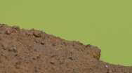 Red rocks on the edge of Green Lake Stock Footage