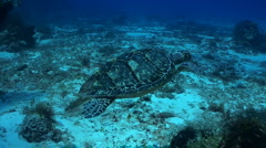 Turtle swimming over coral reef with scuba diver Stock Footage