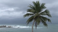 Stock Video Footage of Palm trees and coastline