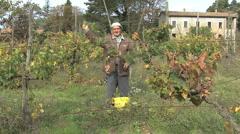 Italy Abruzzo a wine maker picks grapes - stock footage