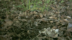 Morel Stock Footage