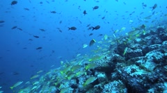 Fish Cocos Stock Footage