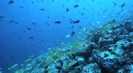 Fish Cocos Stock Footage