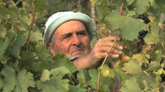 Italy Abruzzo grapepicker Stock Footage