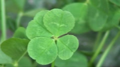 lucky 4 leaf clover - stock footage