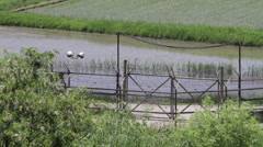 DMZ Panmunjon North Korean border rice fields and river close up Stock Footage