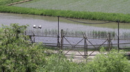 DMZ Panmunjon North Korean border rice fields and river close up Stock Footage