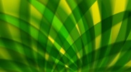 Stock Video Footage of Abstract Palm Fronds Loop
