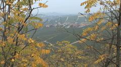 Barolo village through walnut leaves Stock Footage