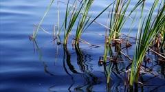 Reeds And Waves Loop - stock footage