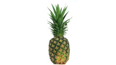Big pineapple rotating Stock Footage