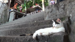 Cat resting on stairs in Chongqing, China Stock Footage