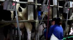 Milking Cows on farm Stock Footage